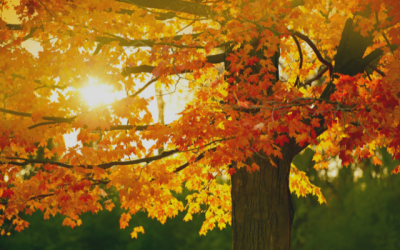 Fall Photo Contest – 2nd Edition